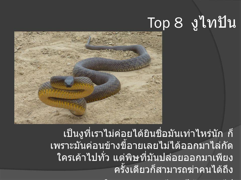 Top 8 งูไทปัน เป็นงูที่เราไม่ค่อยได้ยินชื่อมันเท่าไหร่นัก ก็ เพราะมันค่อนข้างขี้อายเลยไม่ได้ออกมาไล่กัด ใครเค้าไปทั่ว แต่พิษที่มันปล่อยออกมาเพียง ครั้