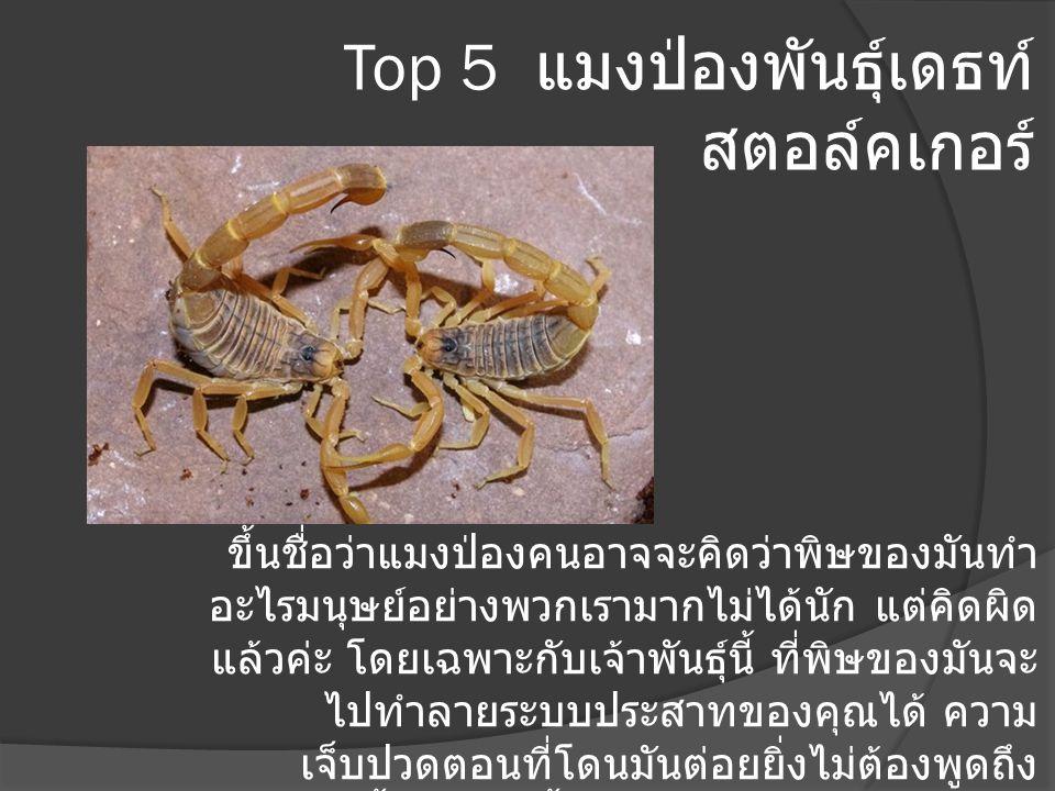 Top 5 แมงป่องพันธุ์เดธท์ สตอล์คเกอร์ ขึ้นชื่อว่าแมงป่องคนอาจจะคิดว่าพิษของมันทำ อะไรมนุษย์อย่างพวกเรามากไม่ได้นัก แต่คิดผิด แล้วค่ะ โดยเฉพาะกับเจ้าพัน