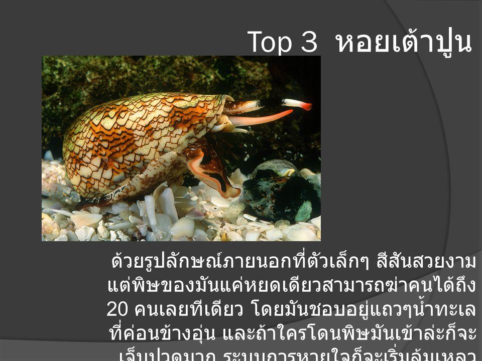 Top 3 หอยเต้าปูน ด้วยรูปลักษณ์ภายนอกที่ตัวเล็กๆ สีสันสวยงาม แต่พิษของมันแค่หยดเดียวสามารถฆ่าคนได้ถึง 20 คนเลยทีเดียว โดยมันชอบอยู่แถวๆน้ำทะเล ที่ค่อนข
