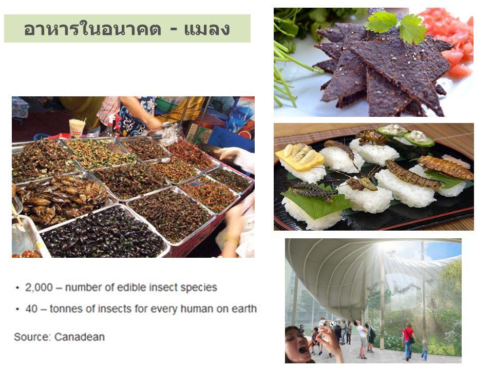 อาหารในอนาคต - แมลง
