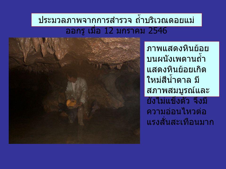 ประมวลภาพจากการสำรวจ ถ้ำบริเวณดอยแม่ ออกรู เมื่อ 12 มกราคม 2546 ภาพแสดงหินย้อย บนผนังเพดานถ้ำ แสดงหินย้อยเกิด ใหม่สีน้ำตาล มี สภาพสมบูรณ์และ ยังไม่แข็งตัว จึงมี ความอ่อนไหวต่อ แรงสั่นสะเทือนมาก