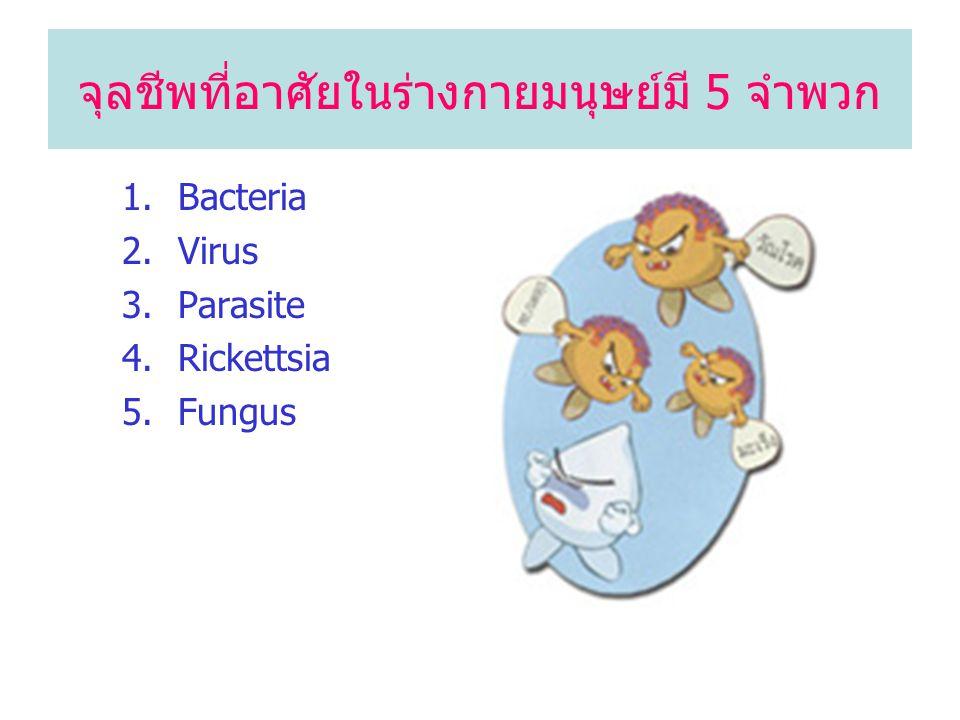 จุลชีพที่อาศัยในร่างกายมนุษย์มี 5 จำพวก 1.Bacteria 2.Virus 3.Parasite 4.Rickettsia 5.Fungus