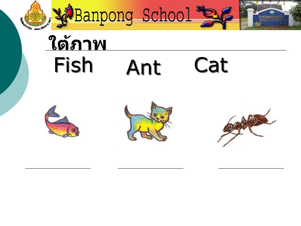 ให้นำคำที่กำหนดมาใส่ ใต้ภาพ Fish Ant Cat