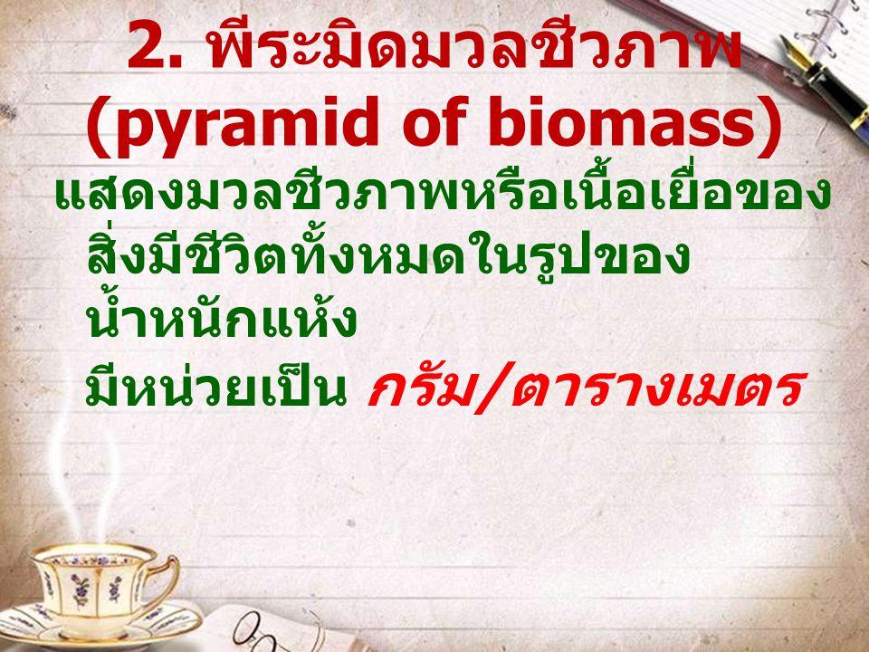 2. พีระมิดมวลชีวภาพ (pyramid of biomass) แสดงมวลชีวภาพหรือเนื้อเยื่อของ สิ่งมีชีวิตทั้งหมดในรูปของ น้ำหนักแห้ง มีหน่วยเป็น กรัม / ตารางเมตร