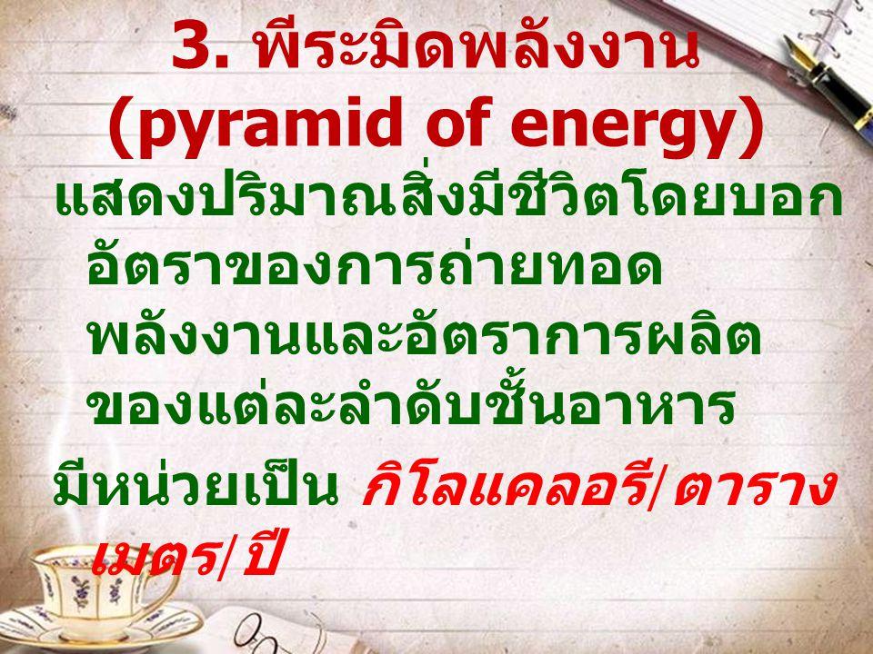 3. พีระมิดพลังงาน (pyramid of energy) แสดงปริมาณสิ่งมีชีวิตโดยบอก อัตราของการถ่ายทอด พลังงานและอัตราการผลิต ของแต่ละลำดับชั้นอาหาร มีหน่วยเป็น กิโลแคล