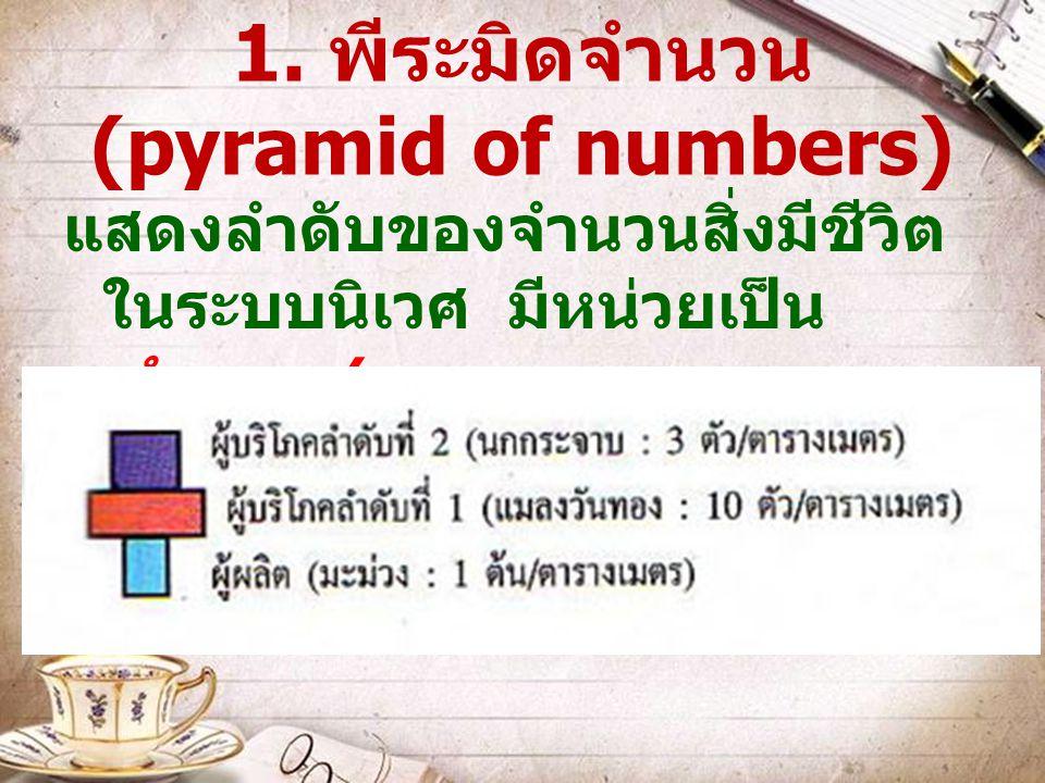 1. พีระมิดจำนวน (pyramid of numbers) แสดงลำดับของจำนวนสิ่งมีชีวิต ในระบบนิเวศ มีหน่วยเป็น จำนวน / ตารางเมตร