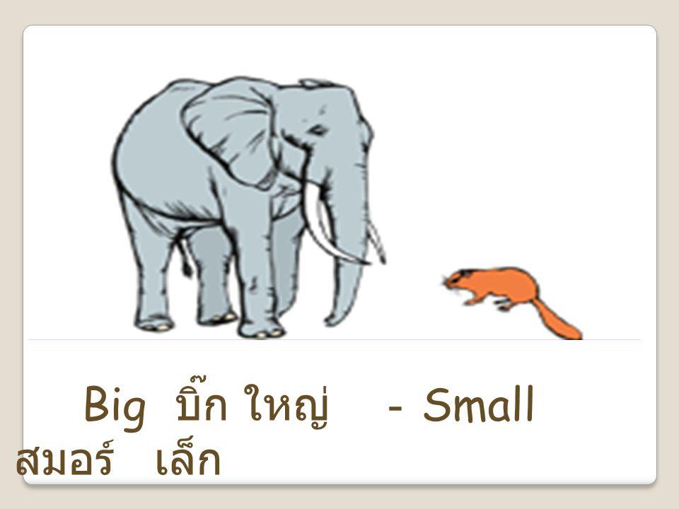 Big บิ๊ก ใหญ่ -Small สมอร์ เล็ก