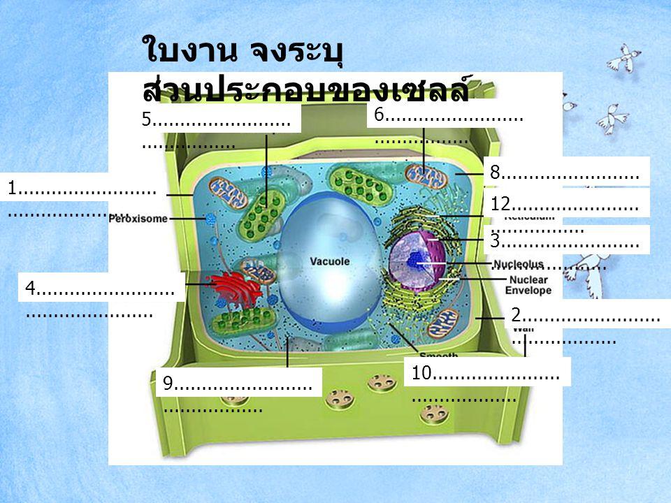 1.กระบวนการทางชีววิทยาประกอบด้วย ขั้นตอนตามลำดับวิธีการอย่างไร 2.