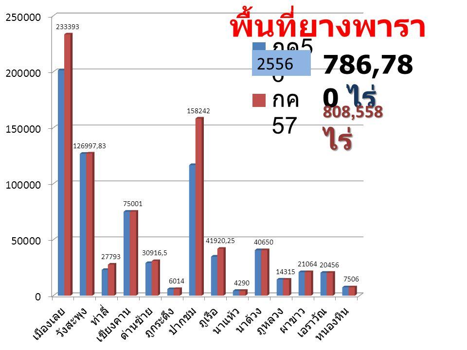 พื้นที่ยางพารา 808,558 ไร่