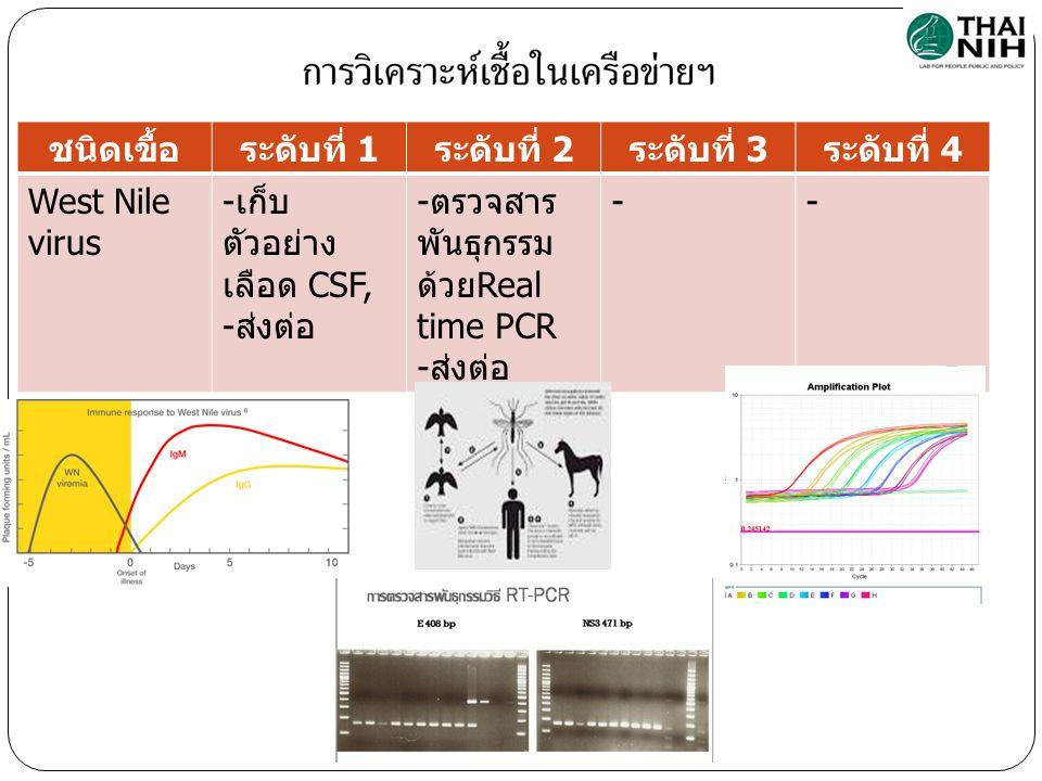 ชนิดเขื้อระดับที่ 1 ระดับที่ 2 ระดับที่ 3 ระดับที่ 4 West Nile virus - เก็บ ตัวอย่าง เลือด CSF, - ส่งต่อ - ตรวจสาร พันธุกรรม ด้วย Real time PCR - ส่งต