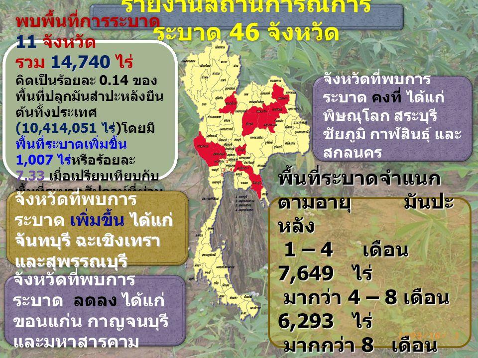 รายงานสถานการณ์การ ระบาด 46 จังหวัด รายงานสถานการณ์การ ระบาด 46 จังหวัด 11 14,740 พบพื้นที่การระบาด 11 จังหวัด รวม 14,740 ไร่ คิดเป็นร้อยละ 0.14 ของ พื้นที่ปลูกมันสำปะหลังยืน ต้นทั้งประเทศ (10,414,051 ไร่ ) โดยมี พื้นที่ระบาดเพิ่มขึ้น 1,007 ไร่หรือร้อยละ 7.33 เมื่อเปรียบเทียบกับ พื้นที่ระบาดสัปดาห์ที่ผ่าน มา (13,733 ไร่ ) 11 14,740 พบพื้นที่การระบาด 11 จังหวัด รวม 14,740 ไร่ คิดเป็นร้อยละ 0.14 ของ พื้นที่ปลูกมันสำปะหลังยืน ต้นทั้งประเทศ (10,414,051 ไร่ ) โดยมี พื้นที่ระบาดเพิ่มขึ้น 1,007 ไร่หรือร้อยละ 7.33 เมื่อเปรียบเทียบกับ พื้นที่ระบาดสัปดาห์ที่ผ่าน มา (13,733 ไร่ ) ได้แก่ จันทบุรี ฉะเชิงเทรา และสุพรรณบุรี จังหวัดที่พบการ ระบาด เพิ่มขึ้น ได้แก่ จันทบุรี ฉะเชิงเทรา และสุพรรณบุรี จังหวัดที่พบการ ระบาด ลดลง ได้แก่ ขอนแก่น กาญจนบุรี และมหาสารคาม พื้นที่ระบาดจำแนก ตามอายุ มันปะ หลัง 1 – 4 เดือน 7,649 ไร่ 1 – 4 เดือน 7,649 ไร่ มากว่า 4 – 8 เดือน 6,293 ไร่ มากว่า 4 – 8 เดือน 6,293 ไร่ มากกว่า 8 เดือน 798 ไร่ มากกว่า 8 เดือน 798 ไร่ จังหวัดที่พบการ ระบาด คงที่ ได้แก่ พิษณุโลก สระบุรี ชัยภูมิ กาฬสินธุ์ และ สกลนคร