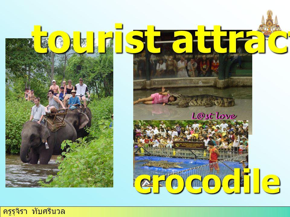 tourist attraction crocodile farm