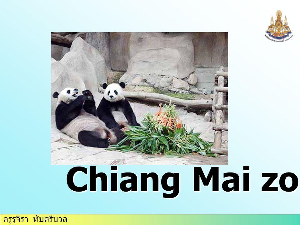 ครูรุจิรา ทับศรีนวล Chiang Mai zoo