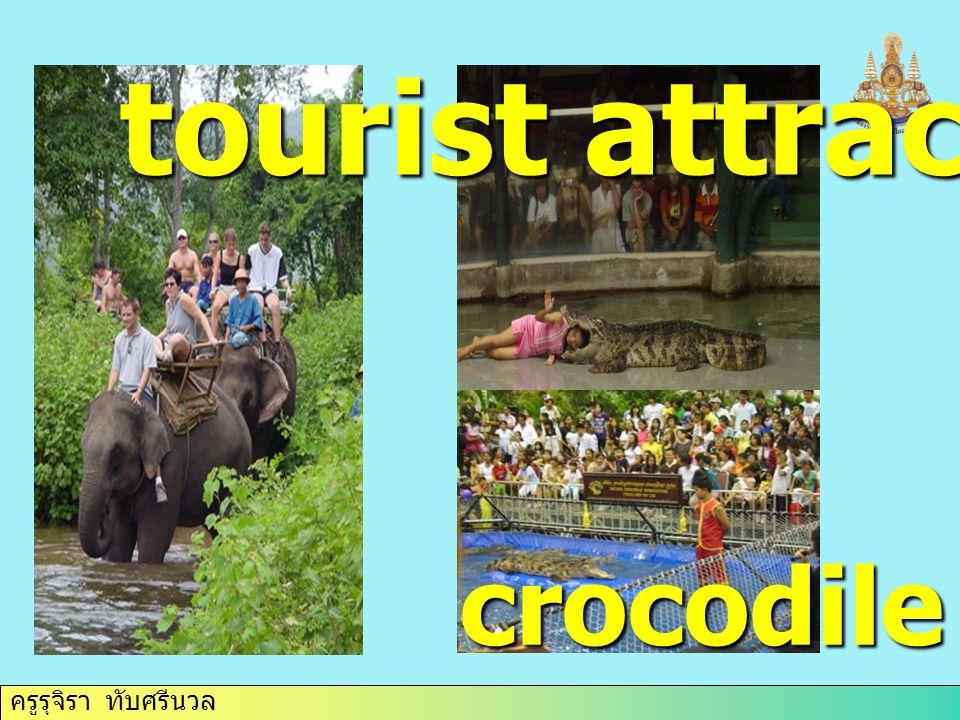 ครูรุจิรา ทับศรีนวล tourist attraction crocodile farm