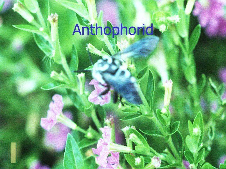 เพลี้ยอ่อน กับ มด Aphid & Ant