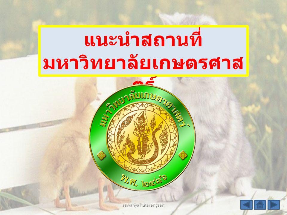 สัตว์เลี้ยงตัวโปรดแมว แหล่งท่องเที่ยว Palio เขาใหญ่ ปางอุ๋ง กระบี่ คติประจำใจไม่มีอะไรเป็นไป ไม่ได้ การติดต่อ minna- memy@hotmail.com sawanya hutarangsan
