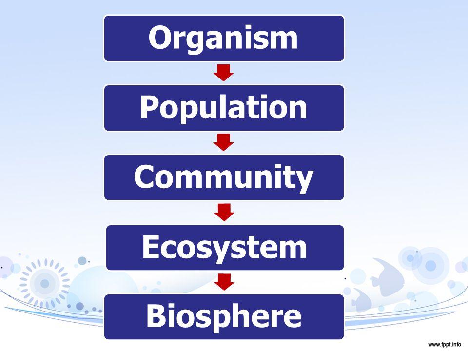 OrganismPopulationCommunityEcosystemBiosphere