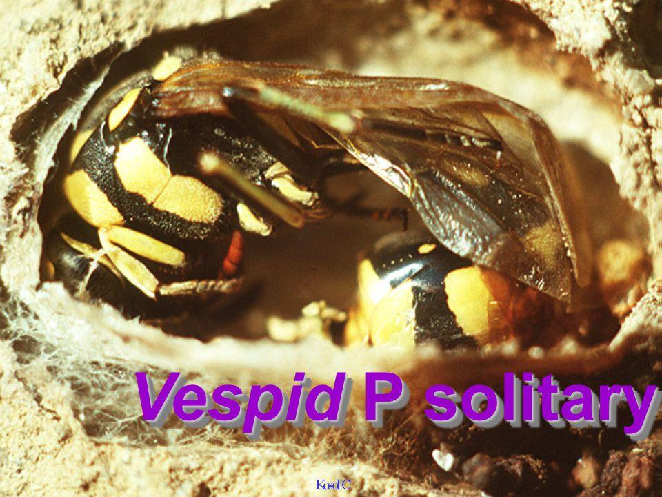 VespidVespid