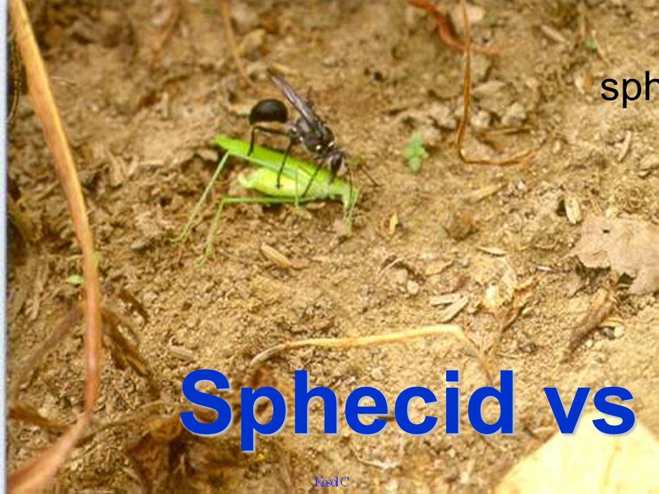 Sphecid gr jewelry wasp