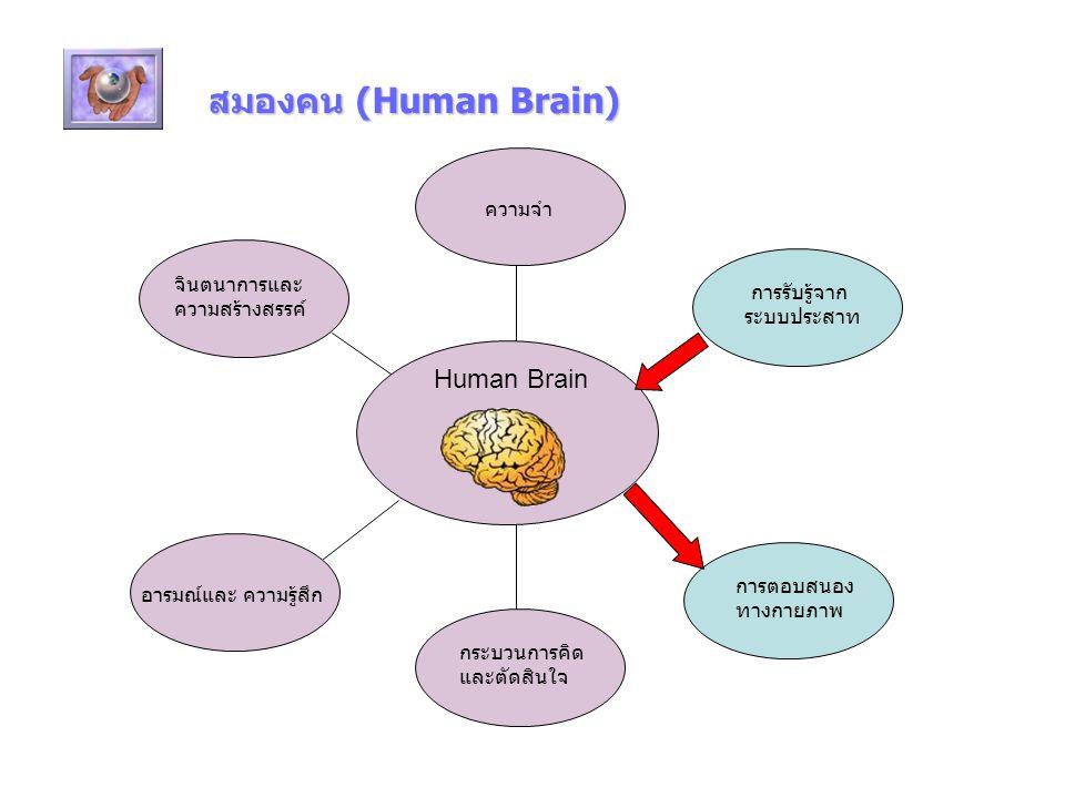สมองคน (Human Brain) Human Brain จินตนาการและ ความสร้างสรรค์ อารมณ์และ ความรู้สึก การรับรู้จาก ระบบประสาท การตอบสนอง ทางกายภาพ กระบวนการคิด และตัดสินใจ ความจำ
