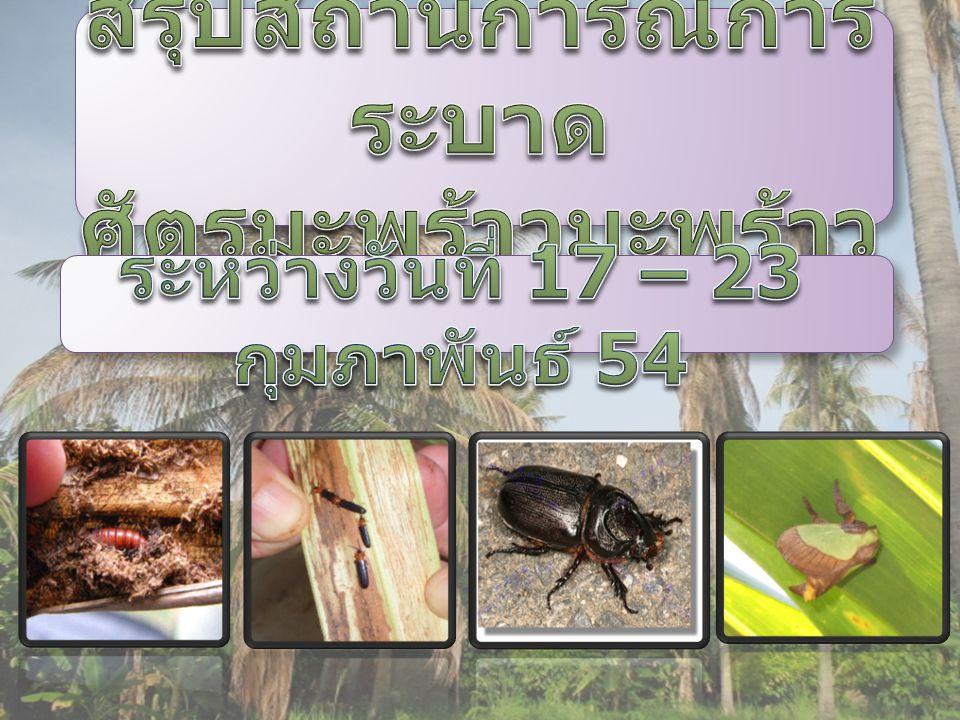 รายงานสถานการณ์การ ระบาดศัตรูมะพร้าว ในพื้นที่จังหวัด ประจวบคีรีขันธ์ นครศรีธรรมราช ชลบุรี สุราษฎร์ธานี ระยอง ราชบุรี ปัตตานีและ นราธิวาส รวมพื้นที่ระบาด 28,252.50 ไร่ เกษตรกร 3,001 ราย ในพื้นที่จังหวัด ประจวบคีรีขันธ์ นครศรีธรรมราช ชลบุรี สุราษฎร์ธานี ระยอง ราชบุรี ปัตตานีและ นราธิวาส รวมพื้นที่ระบาด 28,252.50 ไร่ เกษตรกร 3,001 ราย ในพื้นที่จังหวัด ประจวบคีรีขันธ์ พื้นที่ระบาด 664 ไร่ เกษตรกร 301 ราย ในพื้นที่จังหวัด ประจวบคีรีขันธ์ ชุมพรและ สมุทรสงคราม รวมพื้นที่ระบาด 172,504.50 ไร่ เกษตรกร 13,978 ราย ในพื้นที่จังหวัด ประจวบคีรีขันธ์ ชุมพรและ สมุทรสงคราม รวมพื้นที่ระบาด 172,504.50 ไร่ เกษตรกร 13,978 ราย ในพื้นที่จังหวัด ประจวบคีรีขันธ์ พื้นที่ระบาด 147 ไร่ เกษตรกร 82 ราย หนอนหัว ดำ แมลงดำ หนาม ด้วง แรด หนอน พาราซ่า รวมพื้นที่ระบาดศัตรู มะพร้าว 201,568 ไร่ รวมพื้นที่ระบาดศัตรู มะพร้าว 201,568 ไร่