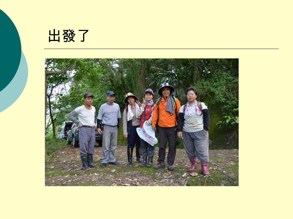 尋找菌絲與辨識樹種
