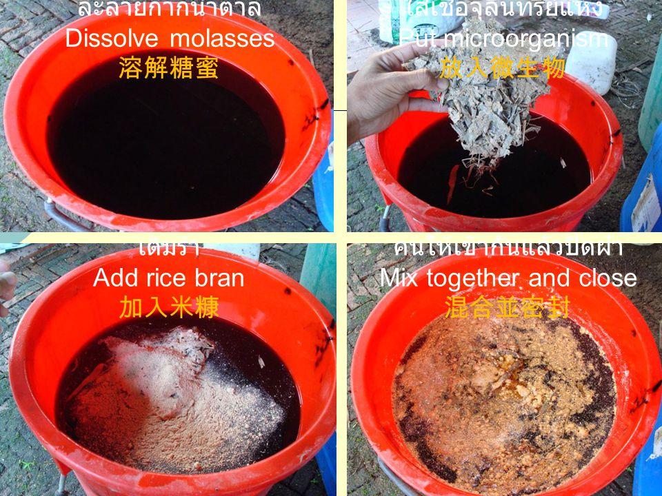ละลายกากน้ำตาล Dissolve molasses 溶解糖蜜 คนให้เข้ากันแล้วปิดฝา Mix together and close 混合並密封 เติมรำ Add rice bran 加入米糠 ใส่เชื้อจุลินทรีย์แห้ง Put microorganism 放入微生物