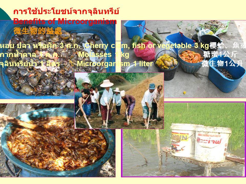 หอย ปลา หรือผัก 3 ก. ก. Cherry clam, fish or vegetable 3 kg 櫻蛤、魚或蔬菜 3 公斤 กากน้ำตาล 1 ก.