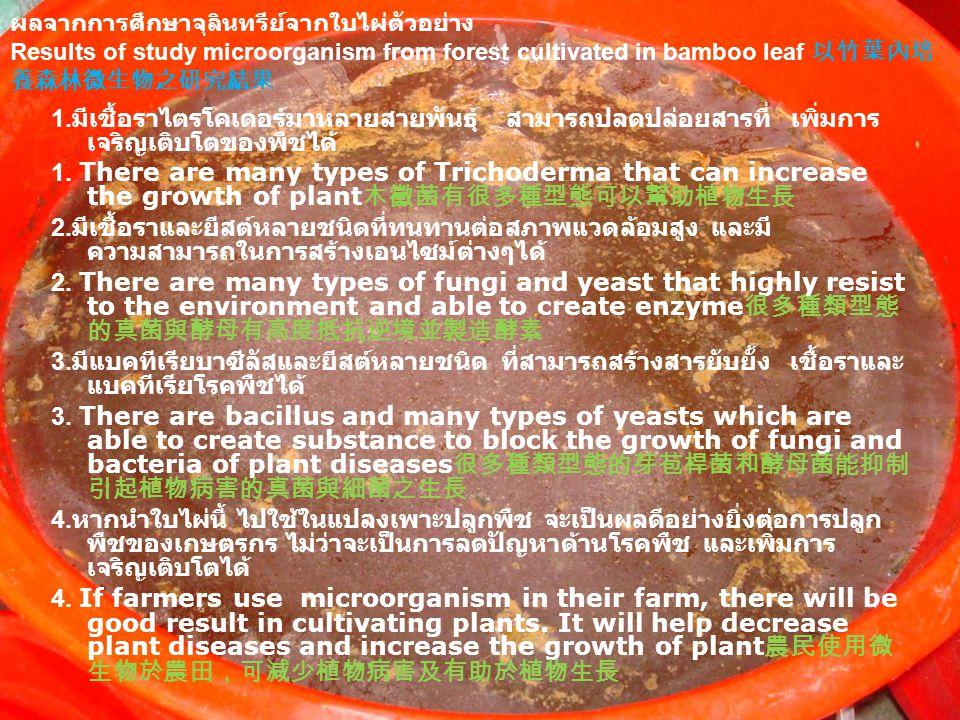 1. มีเชื้อราไตรโคเดอร์มาหลายสายพันธุ์ สามารถปลดปล่อยสารที่ เพิ่มการ เจริญเติบโตของพืชได้ 1.