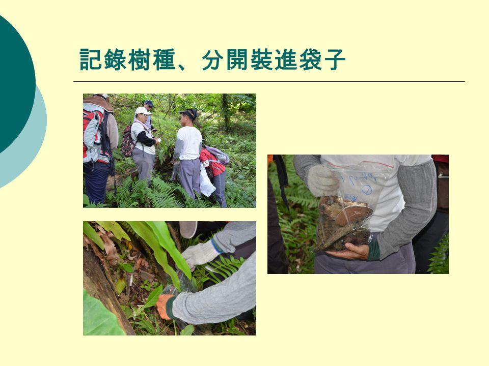 記錄樹種、分開裝進袋子