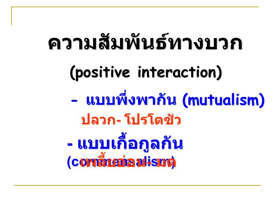 ความสัมพันธ์ทางบวก (positive interaction) - แบบพึ่งพากัน (mutualism) - แบบเกื้อกูลกัน (commensalism) เพลี้ยอ่อน - มด ปลวก - โปรโตซัว