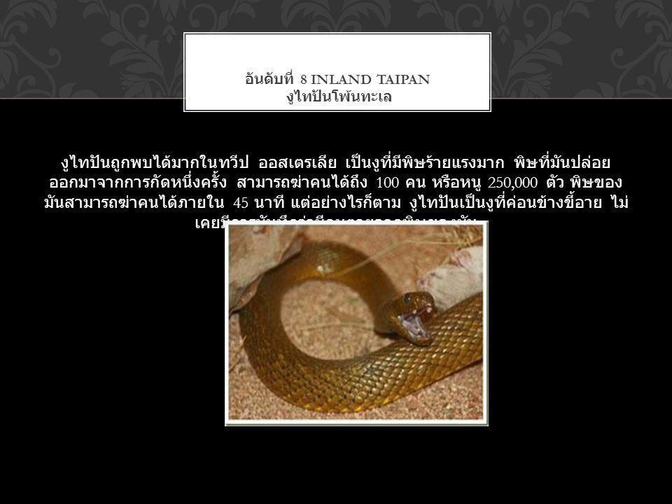 งูไทปันถูกพบได้มากในทวีป ออสเตรเลีย เป็นงูที่มีพิษร้ายแรงมาก พิษที่มันปล่อย ออกมาจากการกัดหนึ่งครั้ง สามารถฆ่าคนได้ถึง 100 คน หรือหนู 250,000 ตัว พิษข