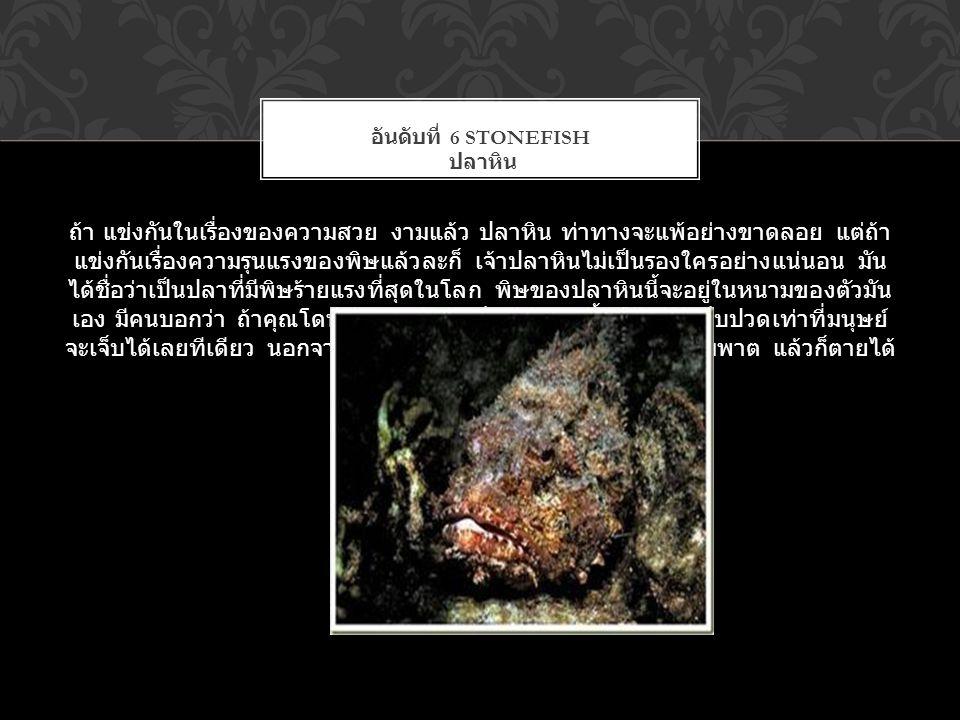 ถ้า แข่งกันในเรื่องของความสวย งามแล้ว ปลาหิน ท่าทางจะแพ้อย่างขาดลอย แต่ถ้า แข่งกันเรื่องความรุนแรงของพิษแล้วละก็ เจ้าปลาหินไม่เป็นรองใครอย่างแน่นอน มั