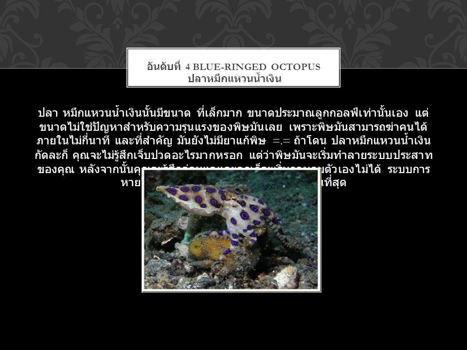 ปลา หมึกแหวนน้ำเงินนั้นมีขนาด ที่เล็กมาก ขนาดประมาณลูกกอลฟ์เท่านั้นเอง แต่ ขนาดไม่ใช่ปัญหาสำหรับความรุนแรงของพิษมันเลย เพราะพิษมันสามารถฆ่าคนได้ ภายใน