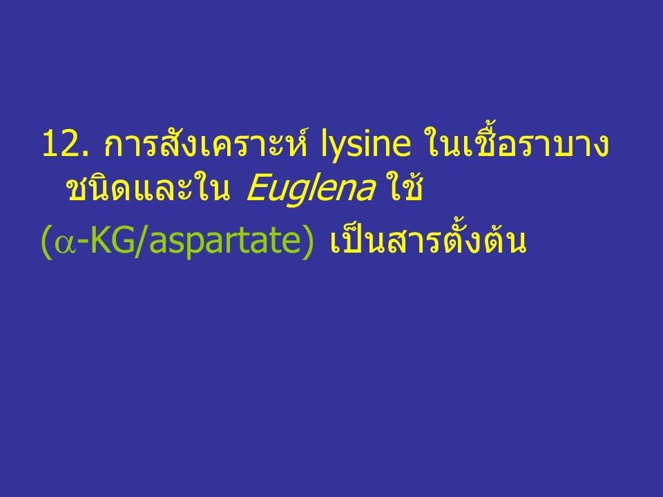 12. การสังเคราะห์ lysine ในเชื้อราบาง ชนิดและใน Euglena ใช้ (  -KG/aspartate) เป็นสารตั้งต้น