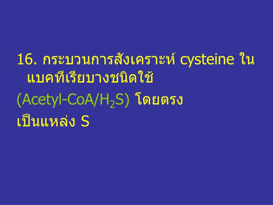 16. กระบวนการสังเคราะห์ cysteine ใน แบคทีเรียบางชนิดใช้ (Acetyl-CoA/H 2 S) โดยตรง เป็นแหล่ง S