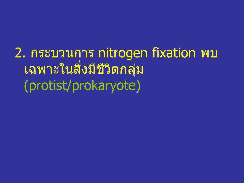 2. กระบวนการ nitrogen fixation พบ เฉพาะในสิ่งมีชีวิตกลุ่ม (protist/prokaryote)