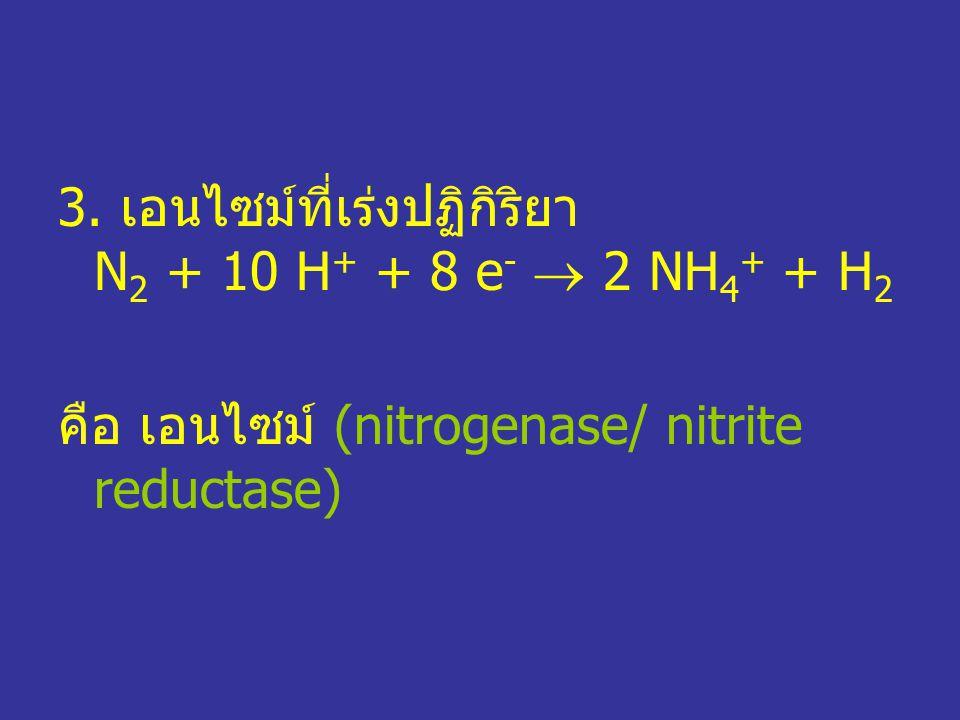 3. เอนไซม์ที่เร่งปฏิกิริยา N 2 + 10 H + + 8 e -  2 NH 4 + + H 2 คือ เอนไซม์ (nitrogenase/ nitrite reductase)