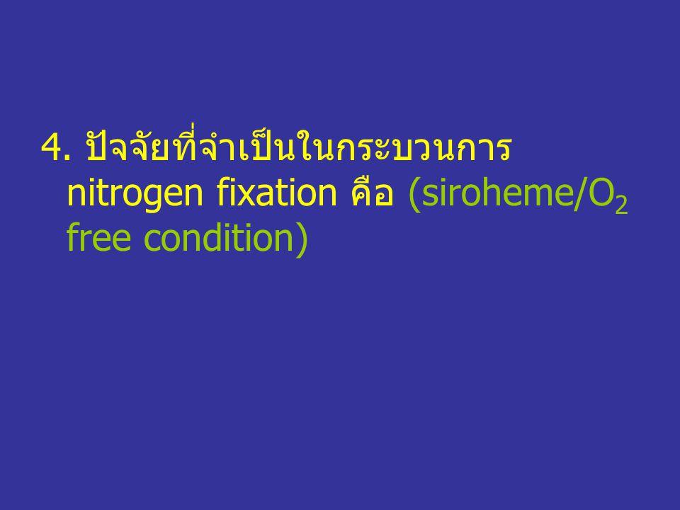 4. ปัจจัยที่จำเป็นในกระบวนการ nitrogen fixation คือ (siroheme/O 2 free condition)