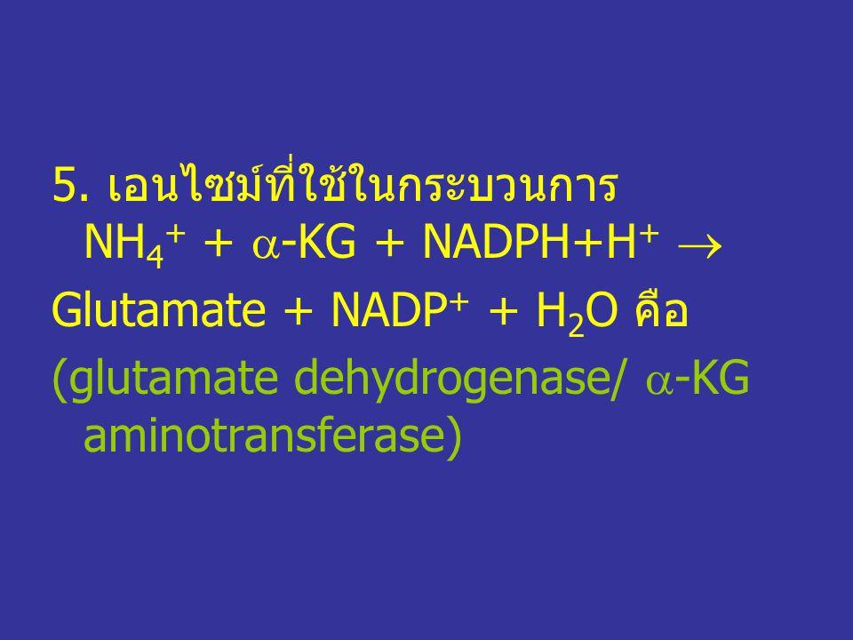 5. เอนไซม์ที่ใช้ในกระบวนการ NH 4 + +  -KG + NADPH+H +  Glutamate + NADP + + H 2 O คือ (glutamate dehydrogenase/  -KG aminotransferase)