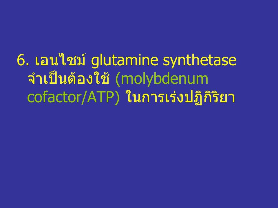 6. เอนไซม์ glutamine synthetase จำเป็นต้องใช้ (molybdenum cofactor/ATP) ในการเร่งปฏิกิริยา