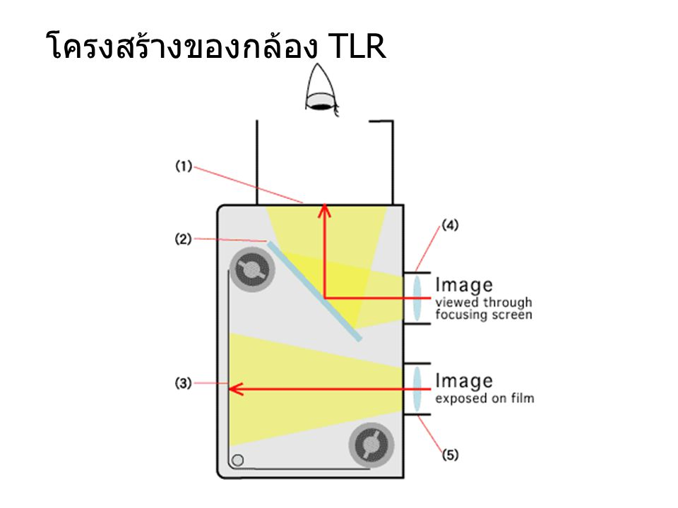 กล้องรีเฟล็กส์เลนส์คู่ (twin lens reflex camera, TLR)