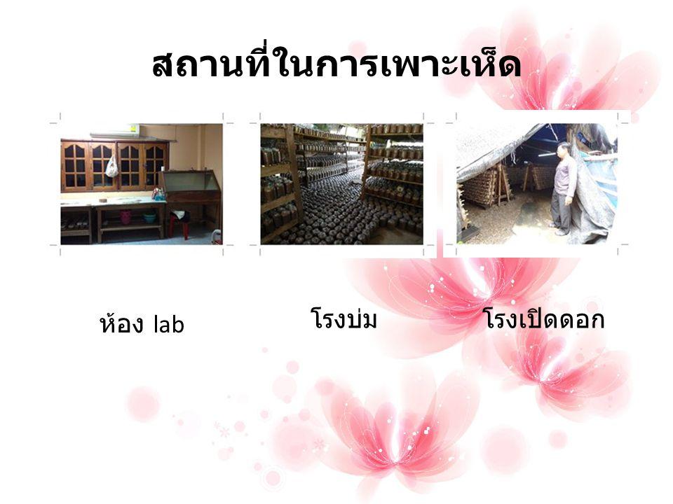สถานที่ในการเพาะเห็ด ห้อง lab โรงบ่มโรงเปิดดอก
