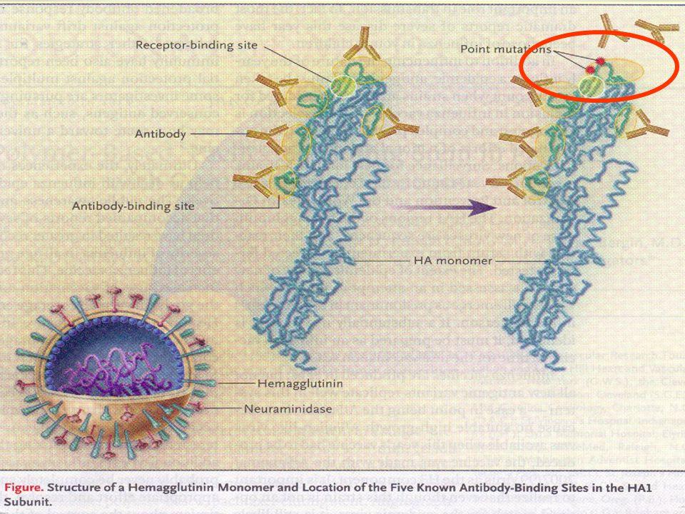 Influenza Vaccine มีมานาน ~ 50 ปีแล้ว 1.คุณภาพดีขึ้น ( split product และ subunit vaccine ) 2.