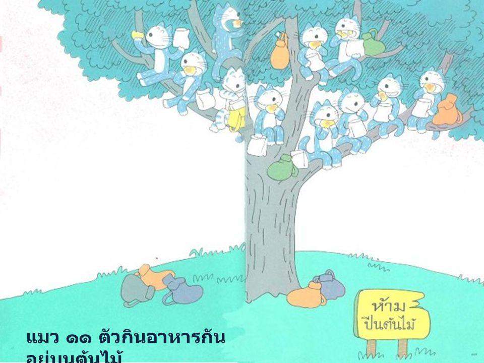 แมว ๑๑ ตัวกินอาหารกัน อยู่บนต้นไม้