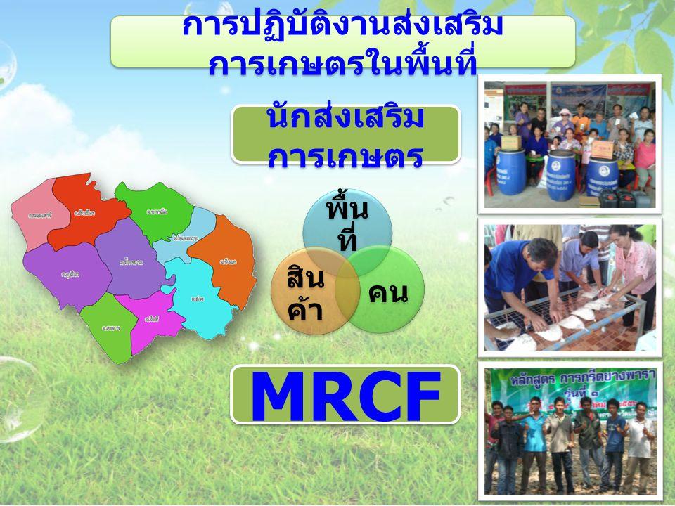 การปฏิบัติงานส่งเสริม การเกษตรในพื้นที่ พื้น ที่ คน สิน ค้า นักส่งเสริม การเกษตร MRCF