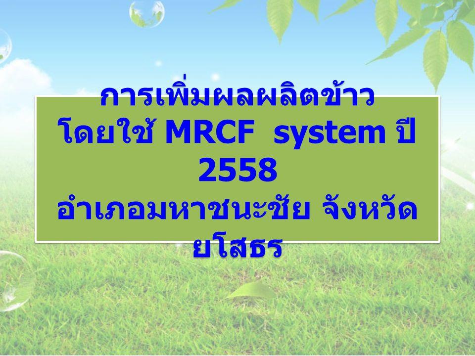 การเพิ่มผลผลิตข้าว โดยใช้ MRCF system ปี 2558 อำเภอมหาชนะชัย จังหวัด ยโสธร