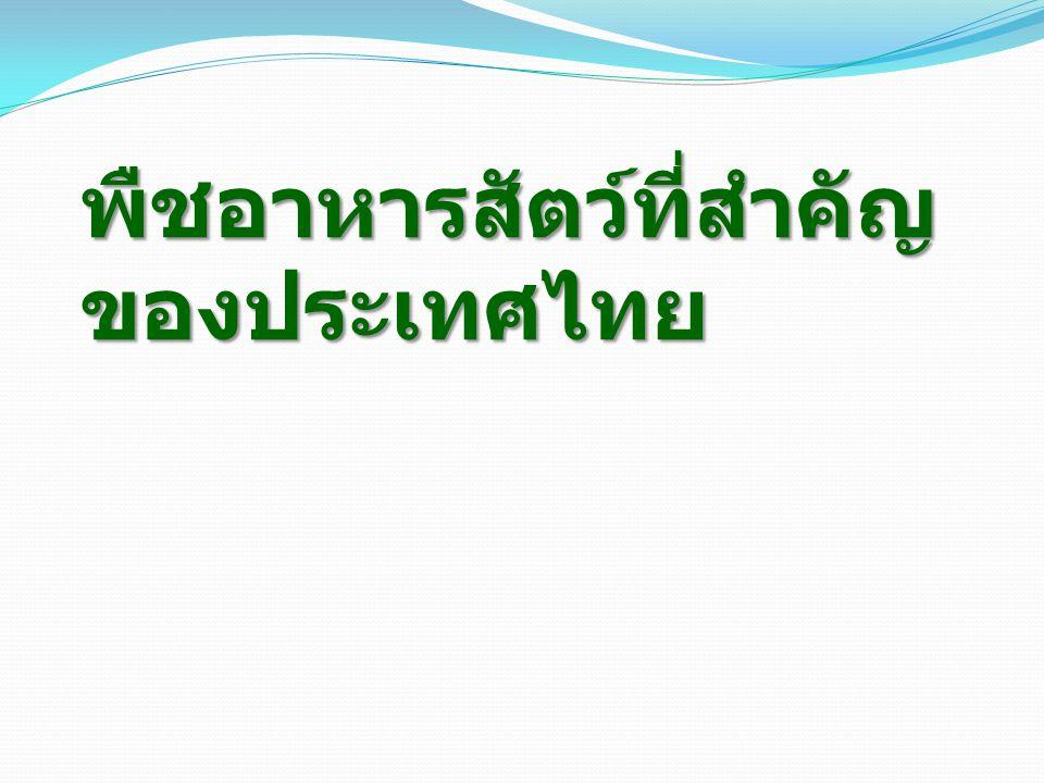 พืชอาหารสัตว์ที่สำคัญ ของประเทศไทย