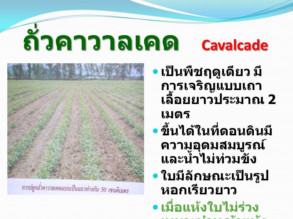 ถั่วคาวาลเคด Cavalcade เป็นพืชฤดูเดียว มี การเจริญแบบเถา เลื้อยยาวประมาณ 2 เมตร ขึ้นได้ในที่ดอนดินมี ความอุดมสมบูรณ์ และน้ำไม่ท่วมขัง ใบมีลักษณะเป็นรูป หอกเรียวยาว เมื่อแห้งใบไม่ร่วง เหมาะทำหญ้าแห้ง สัตว์ชอบกิน การปลูก โดยใช้แมล็ด หว่าน 4 กก.