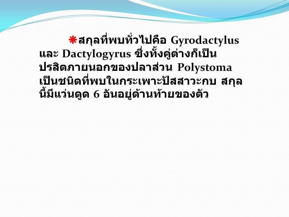  สกุลที่พบทั่วไปคือ Gyrodactylus และ Dactylogyrus ซึ่งทั้งคู่ต่างก็เป็น ปรสิตภายนอกของปลาส่วน Polystoma เป็นชนิดที่พบในกระเพาะปัสสาวะกบ สกุล นี้มีแว่นดูด 6 อันอยู่ด้านท้ายของตัว